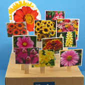 Seed Catalog Garden craft project