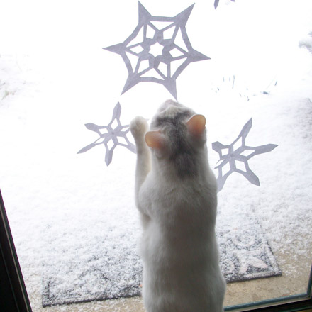 Snowflakes and cat in door