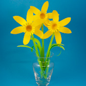 Vase of paper daffodils